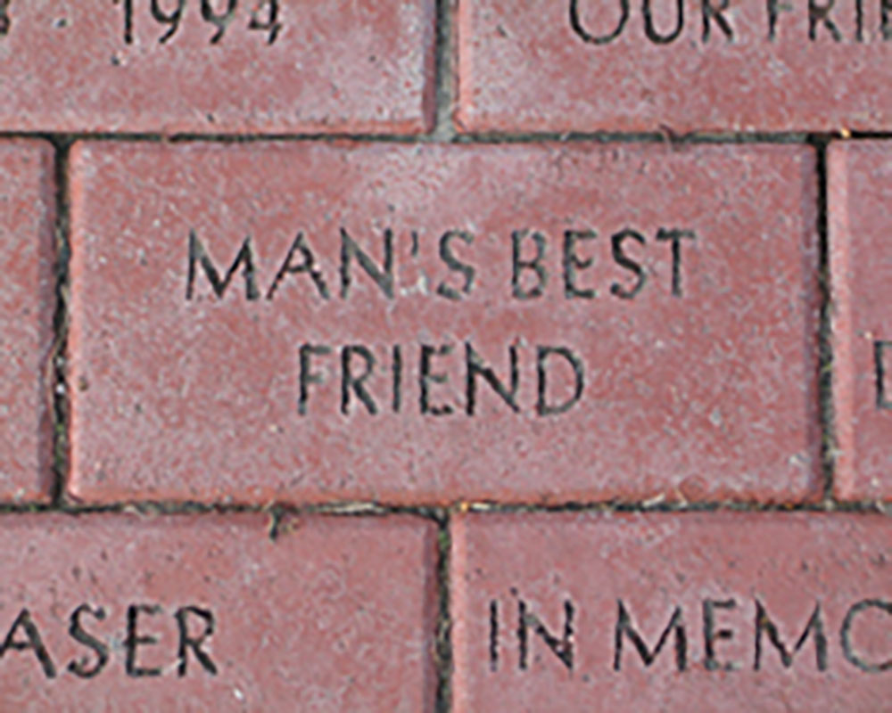 "An image of a brick with the words ""man's best friend' engraved"