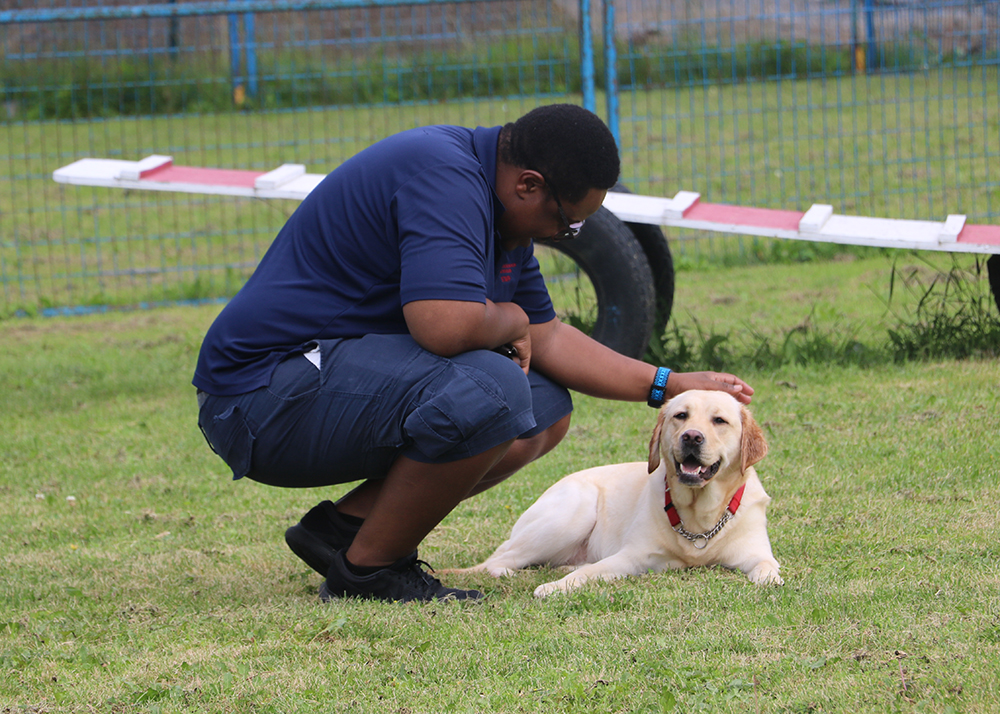 An image of a guide dog trainer bent down petting a yellow lab guide dog laying down