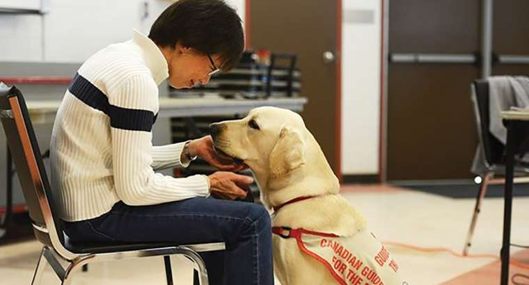 Seniors Learn About Training Guide Dogs