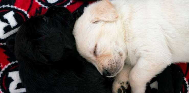 Puppy Partnership with Redblacks