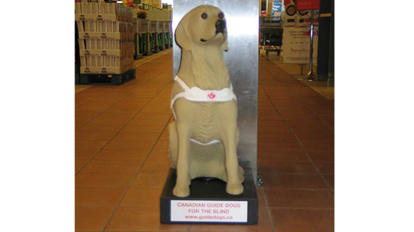 Donation Dog Stolen