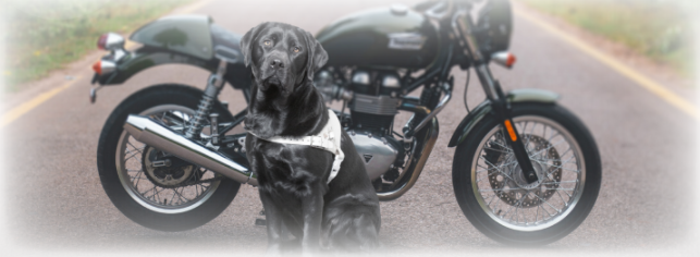 Guide Dog (Motorcycle) Ride